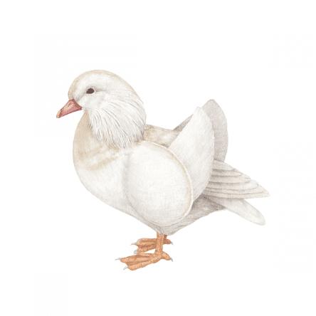 Mandarin Drake Duck Ryuto Miyake