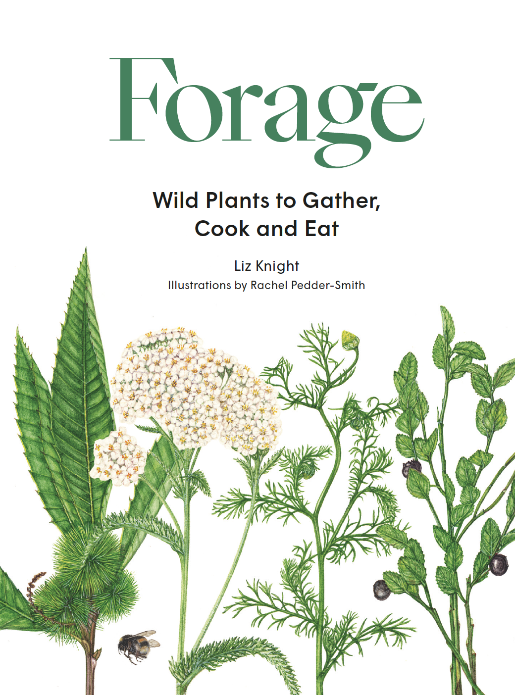 Forage - Product Thumbnail