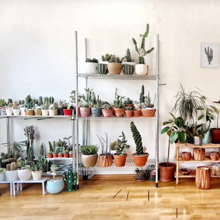 Plant Care Projects for Spring - Blog Image