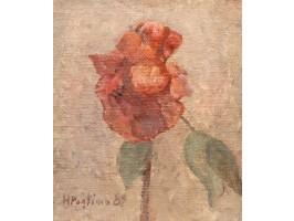 Rose (Trandafir)