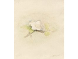 Apple Blossom (Floare de Măr)