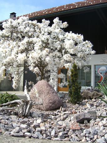 ... Steingarten Lage Gestaltung Und Bepflanzung Homegate Ch ...