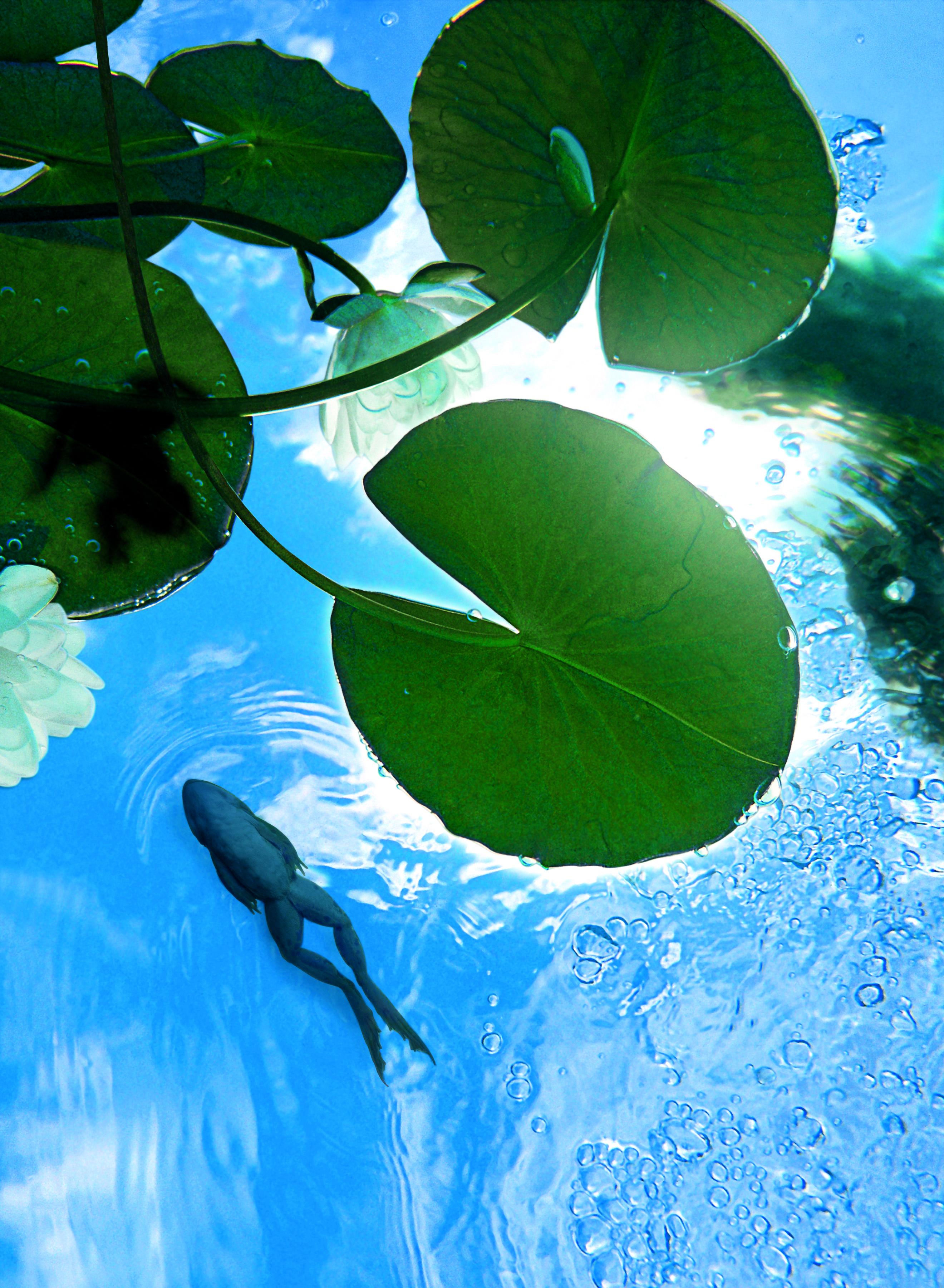 Alerte algues dans l 39 tang du jardin wohnen for Achat poisson etang
