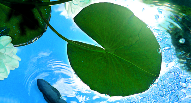Allarme alghe nel laghetto da giardino abitare for Laghetto alghe