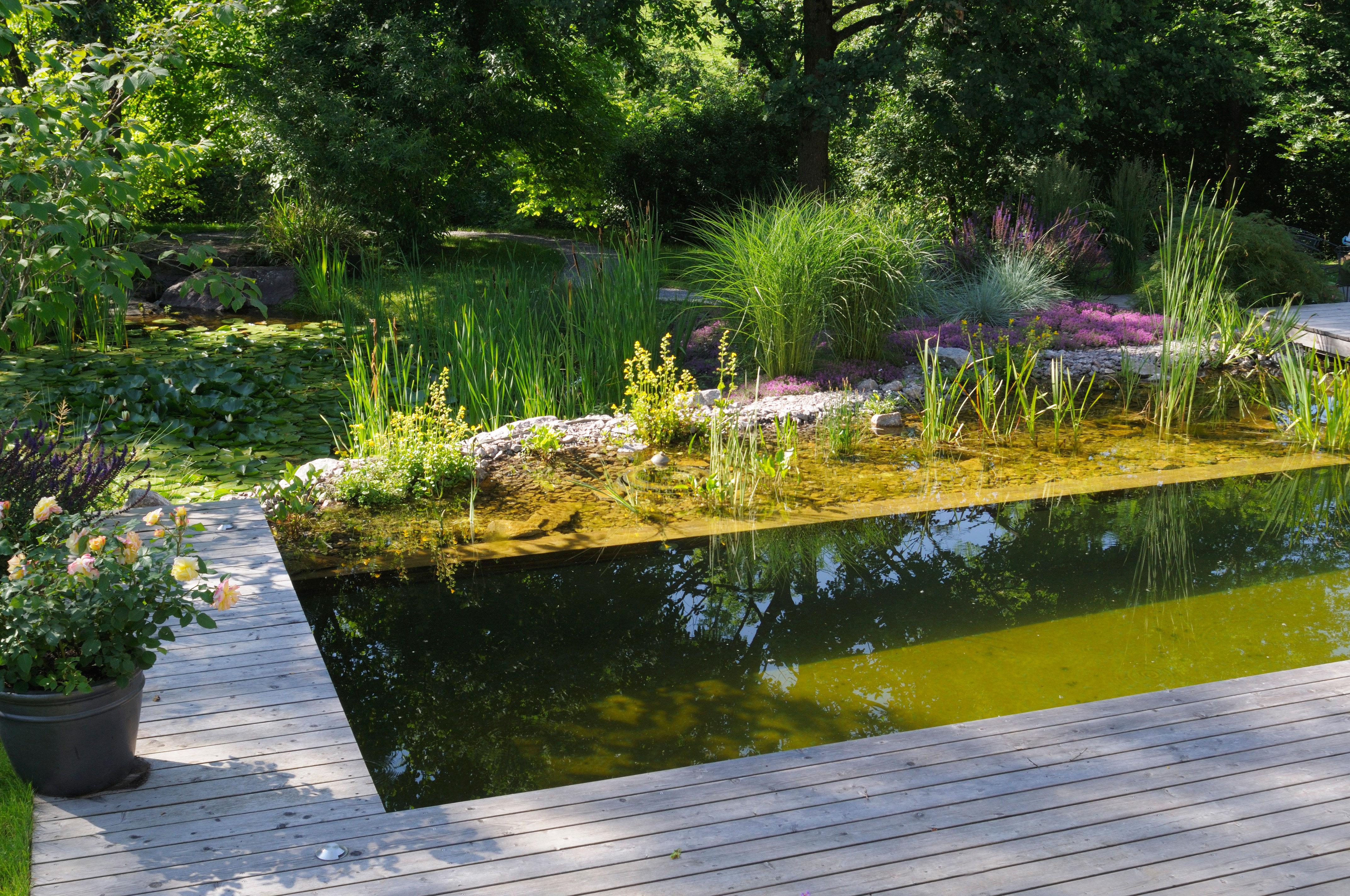 Allarme alghe nel laghetto da giardino abitare for La casa nel laghetto