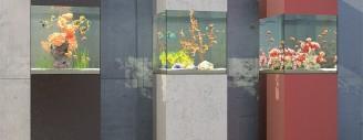 Aquarium-Boxen als frei platzierbare Gestaltungselemente.