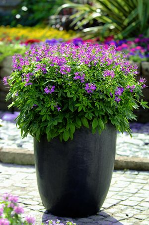Plantes tendances 2015 wohnen for Plantes pour terrasses