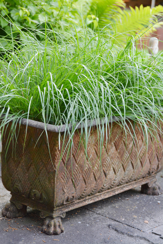 Wer keine Rasenflächen hat oder will, kann den Gräsern in Rostgefässen frönen