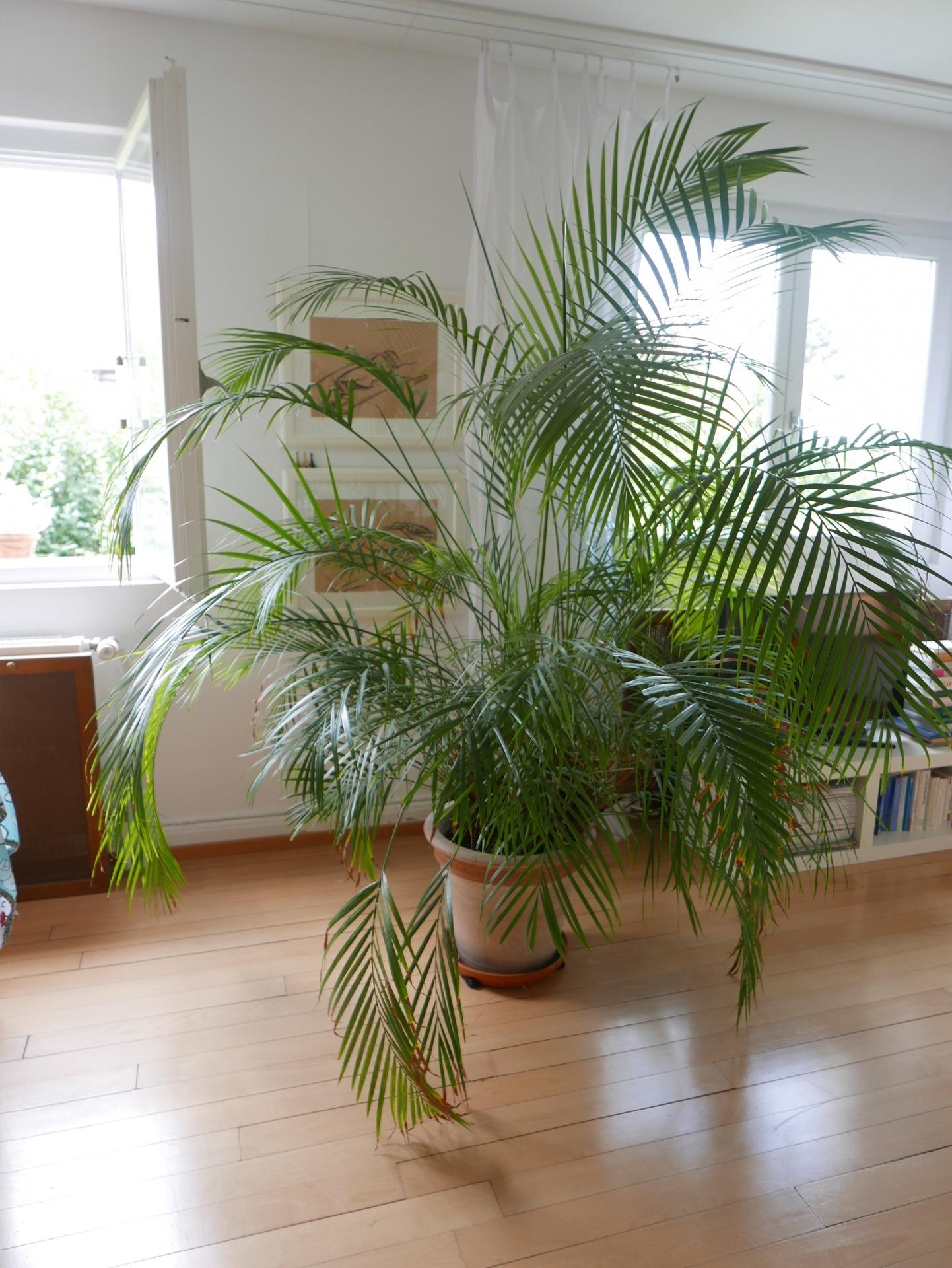 Home nicole knupfer - Palme wohnzimmer ...