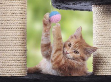 Kratz- und Spielbaum für Katzen