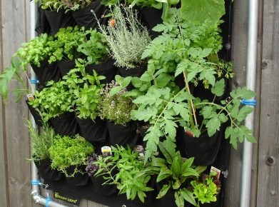 Mini-Garten Homegate
