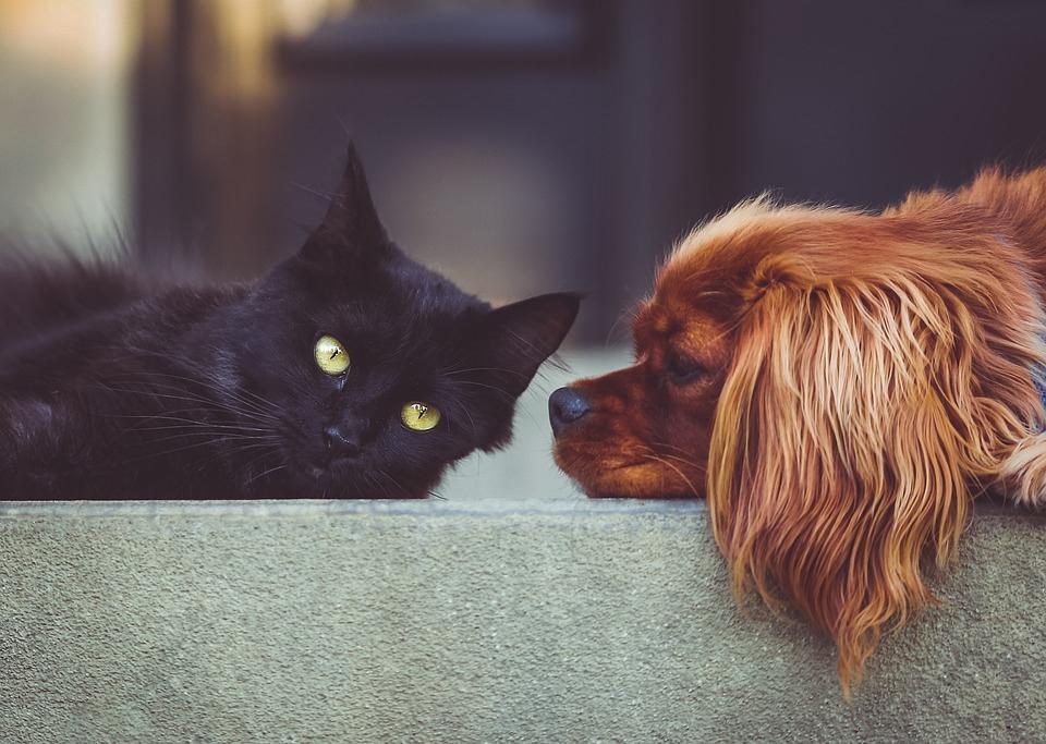 Tierhaltung In Der Mietwohnung Homegatech