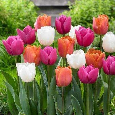 Mazzo Di Fiori Di Primavera.Fiori Di Stagione Cosa Fiorisce In Primavera Homegate Ch