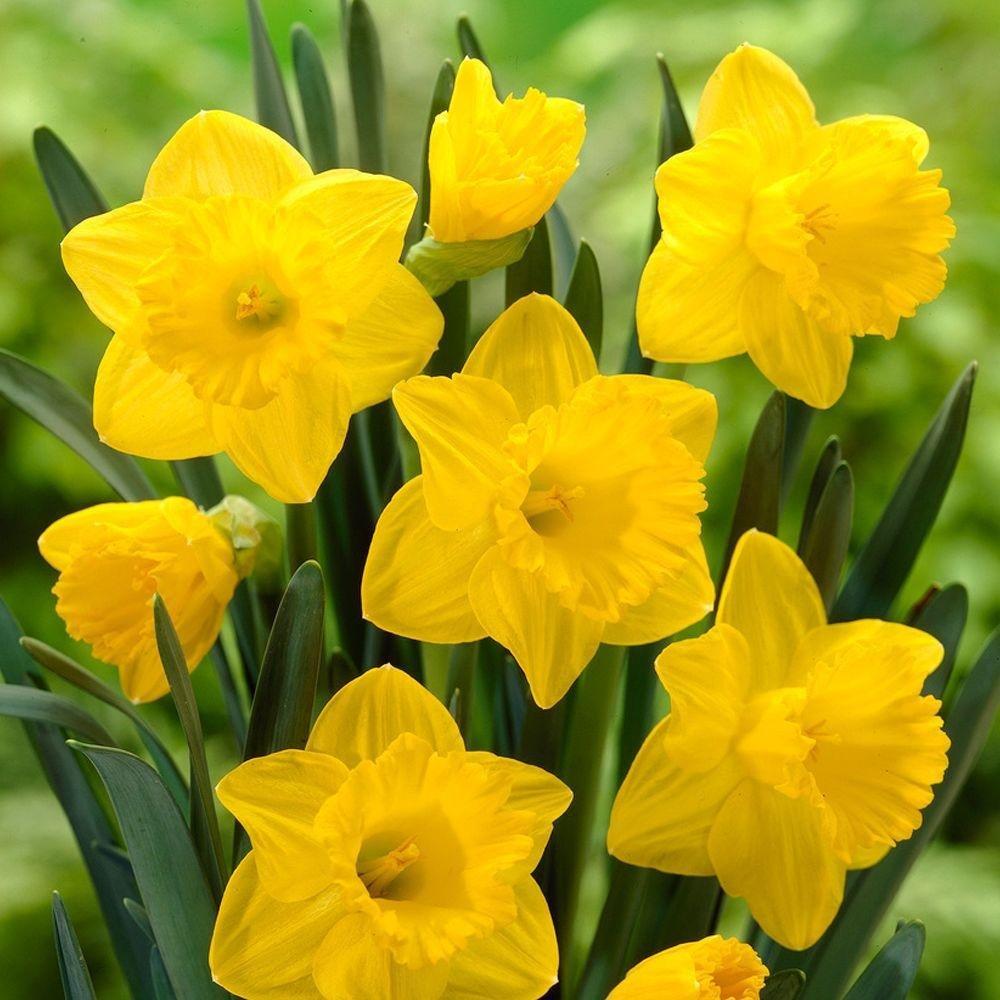 Fiori Di Primavera.Fiori Di Stagione Cosa Fiorisce In Primavera Homegate Ch