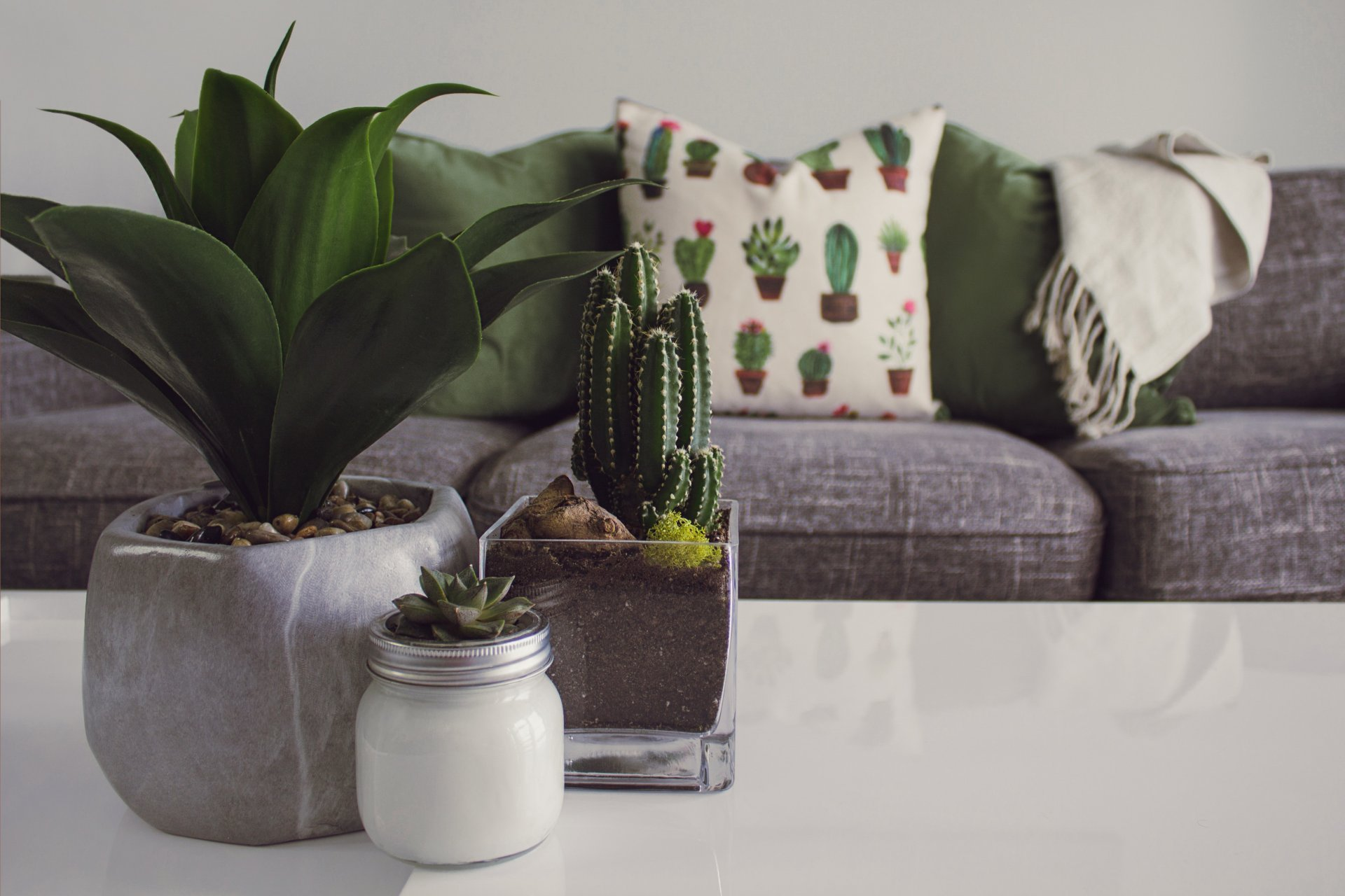 Kakteen und Sukkulenten als Zimmerpflanzen