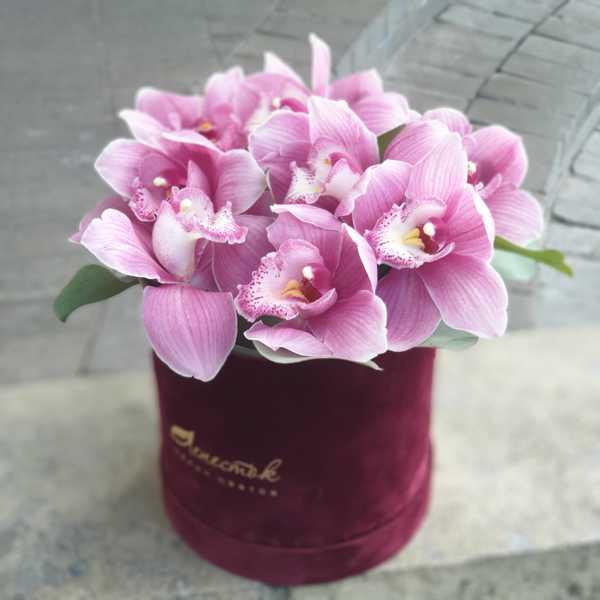 Розовая орхидея цимбидиум в бархатном цилиндре