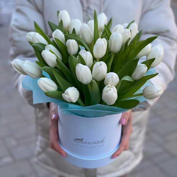 Цилиндр из 35 белоснежных тюльпана