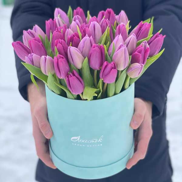 51 тюльпан в бархатном цилиндре