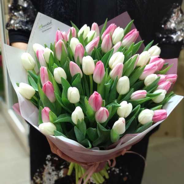 Букетик из 51 белого и розового тюльпана