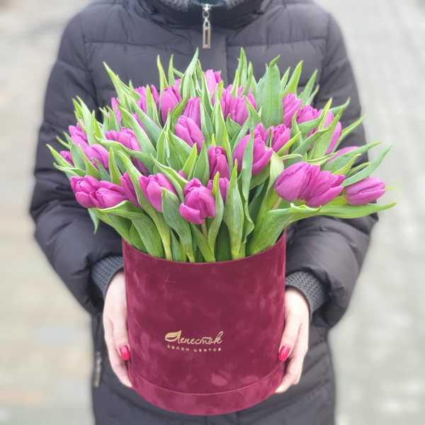 51 голландский тюльпан в бархатном цилиндре