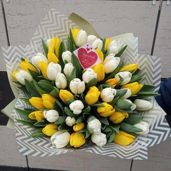 Букет из 51 голландского тюльпана желтого и белого цвета