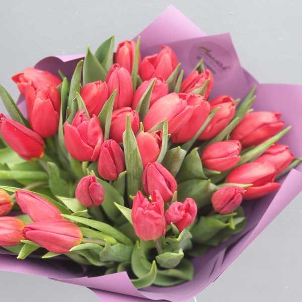 Букет из 31 красного тюльпана в упаковке