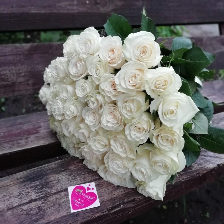 41 белая роза. Сорт мондиаль (Mondial)