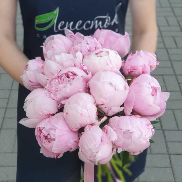 Букет из розовых пионов Сара Бернар