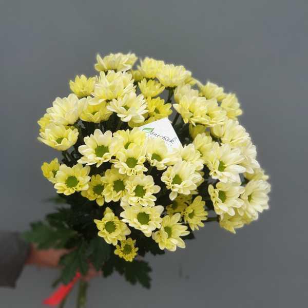 Букет из 5 кремовых хризантем