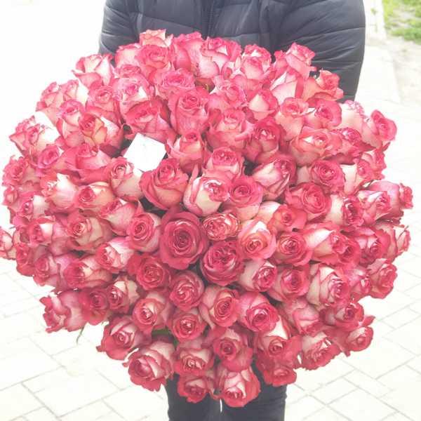 Букет из 101 розы Игуазу