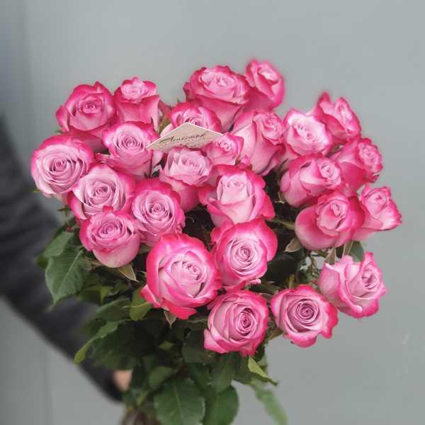 Букет из 25 импортных роз Deep Purple