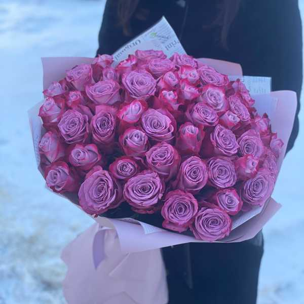 51 роза Deep Purple