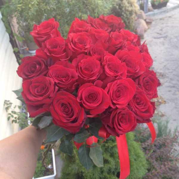 21 красная импортная роза.