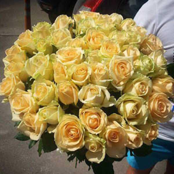 51 роза сорта Пич Аваланш персикового цвета