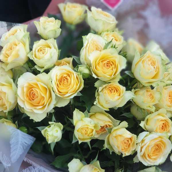 Охапка кустовых роз Бандолеро