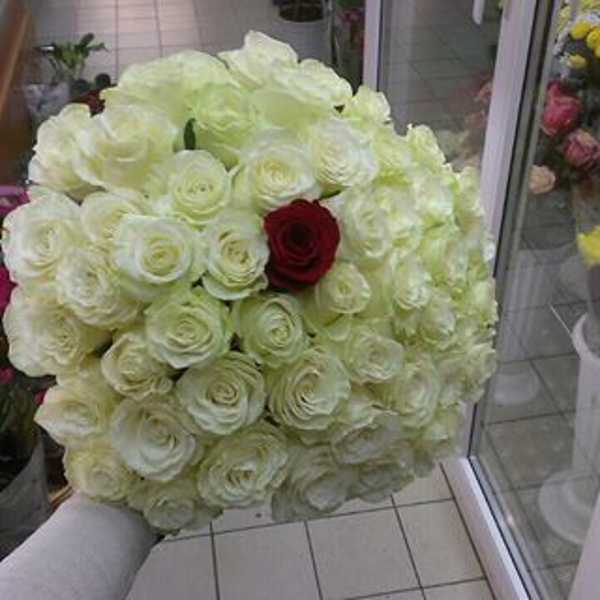 51 роза белая с красной в центре