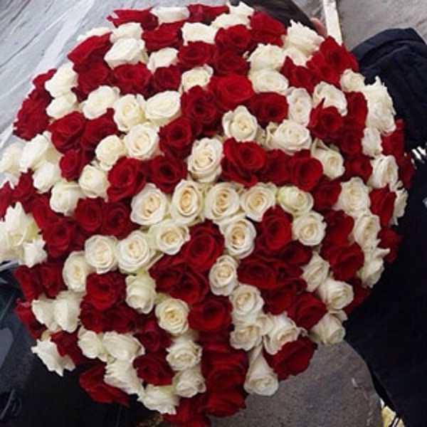 101 красно белая роза микс
