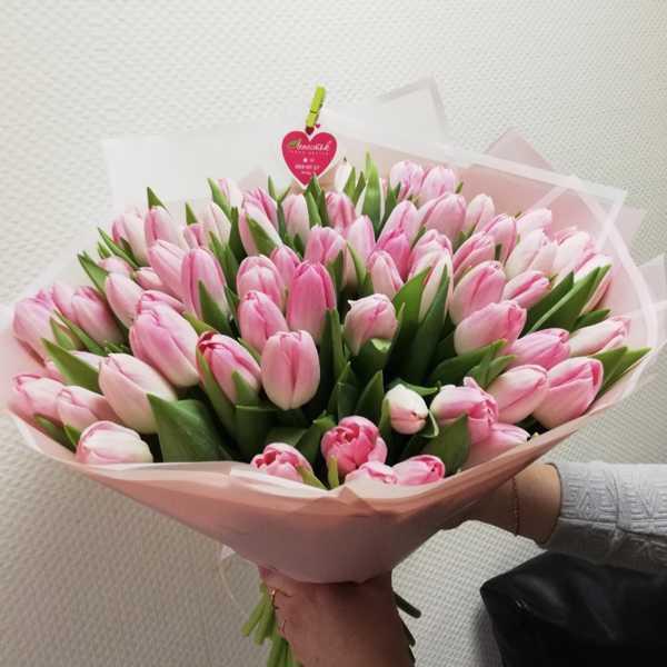 Нежный букет из 71 розового тюльпана
