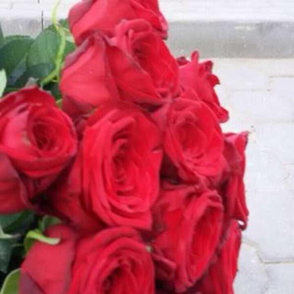 15 роз сорта Рэд Наоми