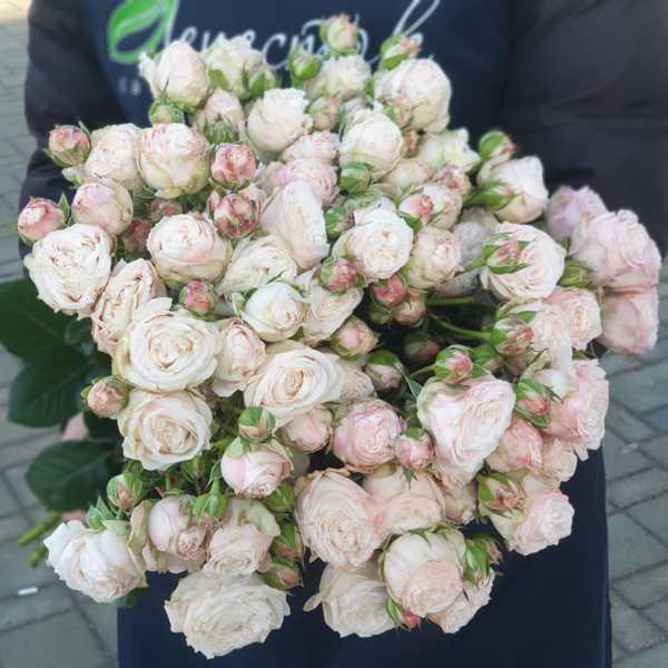 Монобукет из кустовых роз Бомбастик