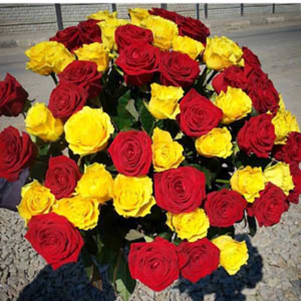 51 красно желтая роза 60 см