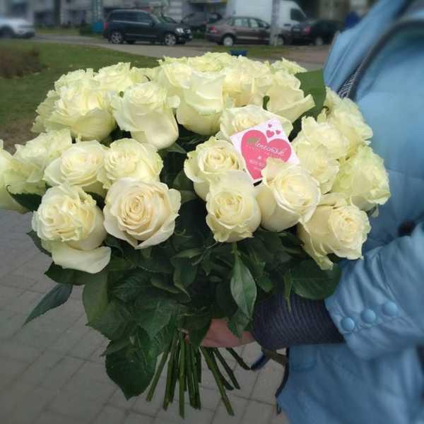 31 белая, импортная роза