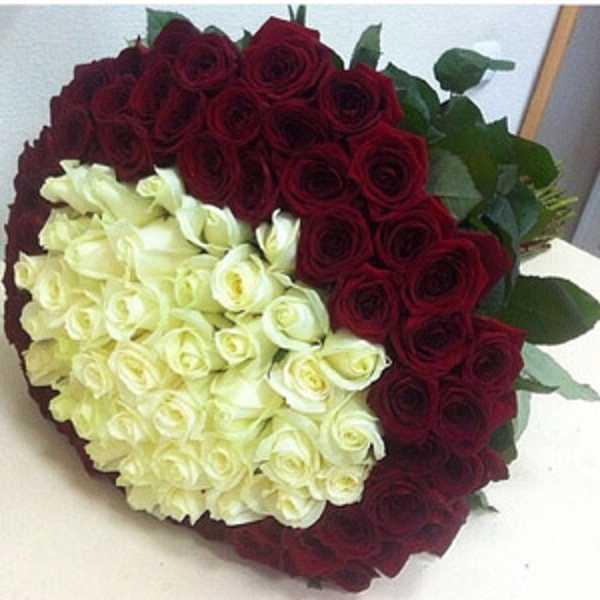 101 роза. Белые в красном кольце