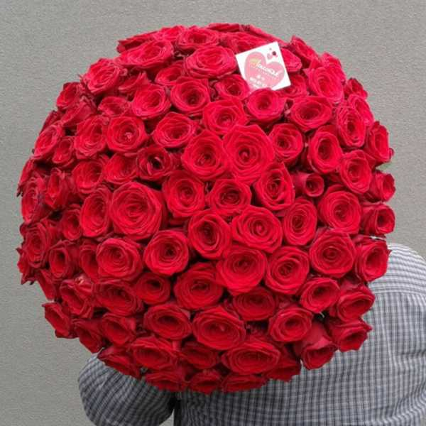 101 беларуская красная роза