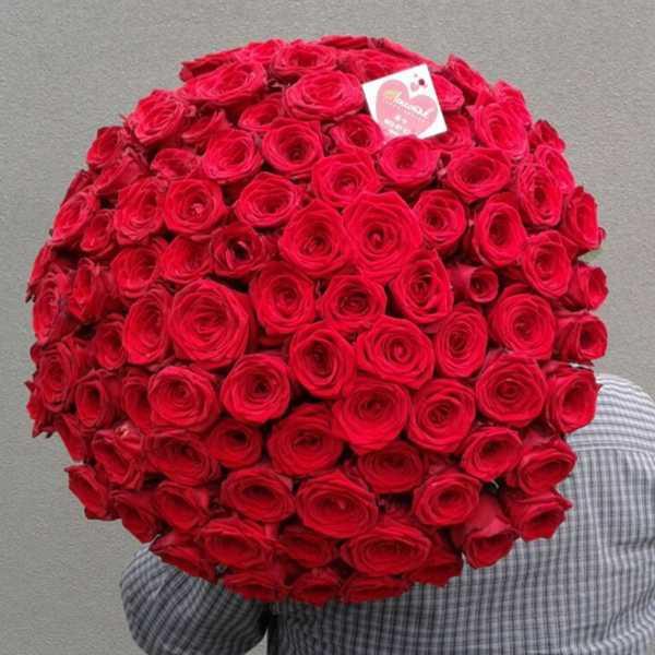 101 белорусская красная роза