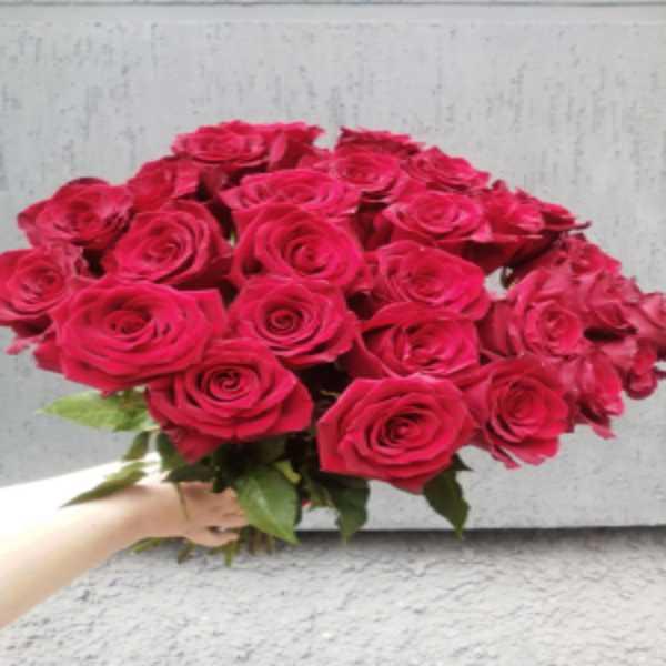 27 красных роз сорта (Explorer)