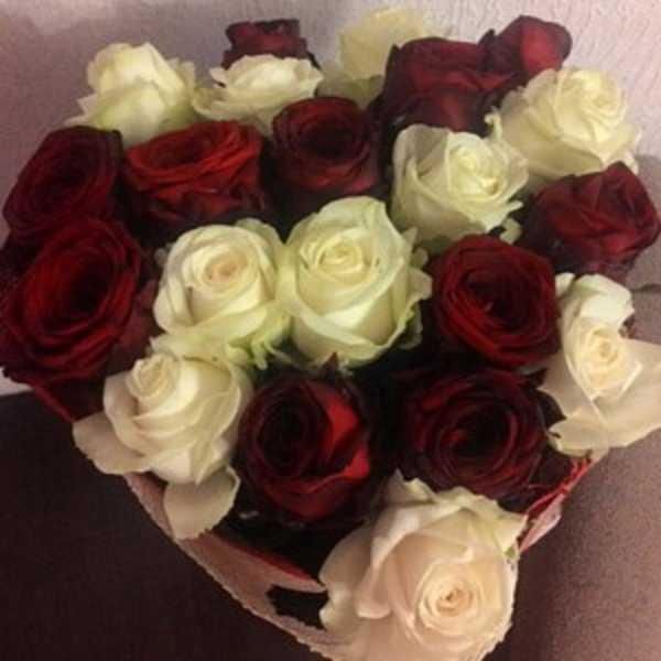 21 красно белая роза с упаковкой