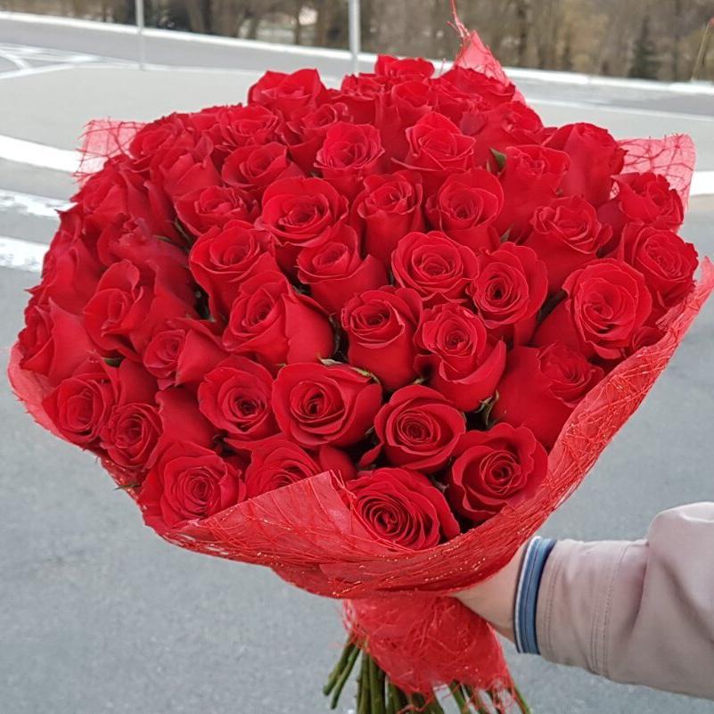51 импортная роза Freedom