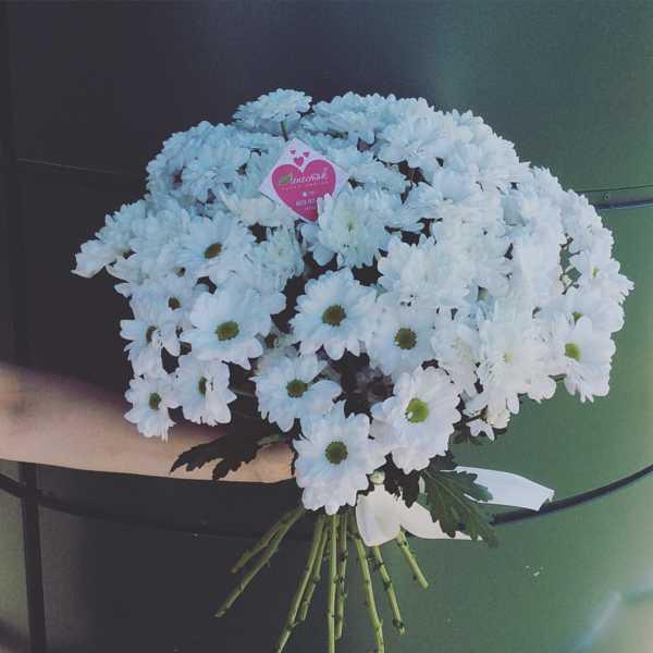 Букет из 15 кустовых хризантем белого цвета