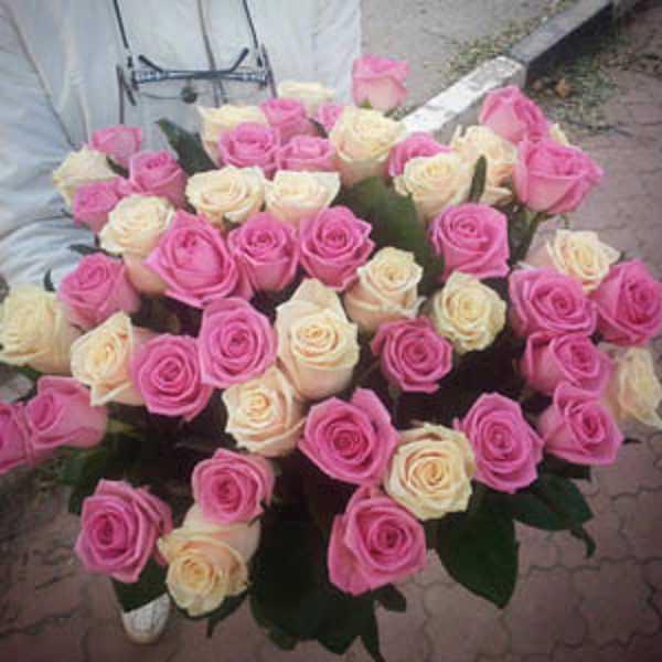 51 роза кремового и розового цветов
